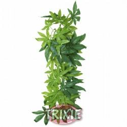 Planta seda colgante Terrarios Abutilon