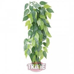 Planta seda colgante Terrarios Ficus