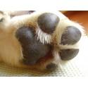 Higiene de patas y uñas